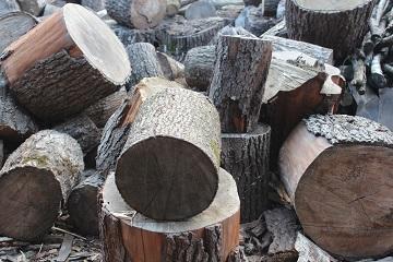 Бревна дерева